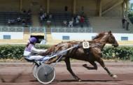 [TROT] Prix de l'École des Courses Hippiques - Hippodrome de Salon-de-Provence - 17 juin 2019