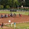 [TROT] Prix École des Courses Hippiques - Hippodrome de Cagnes-sur-Mer - 17 juillet 2019